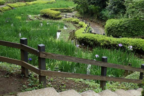 菖蒲園の花