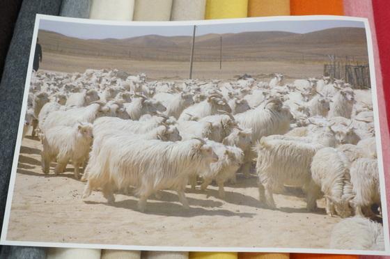 カシミア山羊
