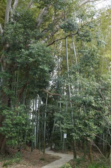 武相荘 散策路2