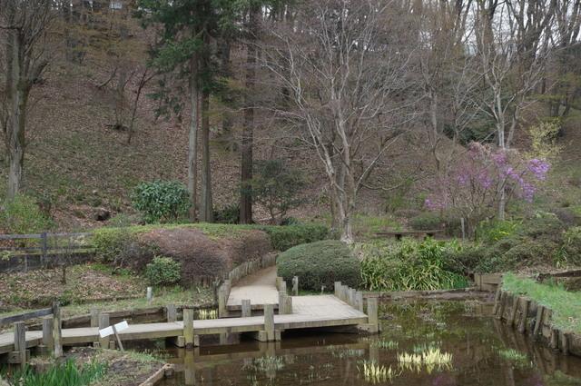 菖蒲園のイメージ