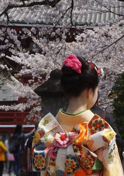 桜と十三参りと